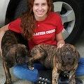 Happy Barks dog boarding & pet sitting