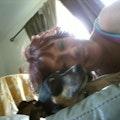 WE LOVE DOGS! dog boarding & pet sitting