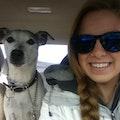 Gwen's Pet Care dog boarding & pet sitting