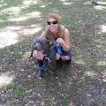 Stef's Pet Pardise on IOH dog boarding & pet sitting