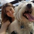 Sparrow's Pets, Flemington dog boarding & pet sitting