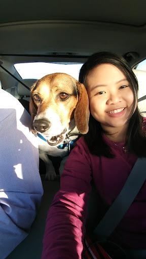 Clarissa's dog day care