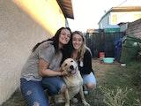 Waggin' Tails Inn dog boarding & pet sitting
