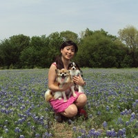 Satomi's dog boarding