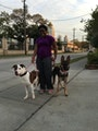 Lynette pals and paws dog boarding & pet sitting