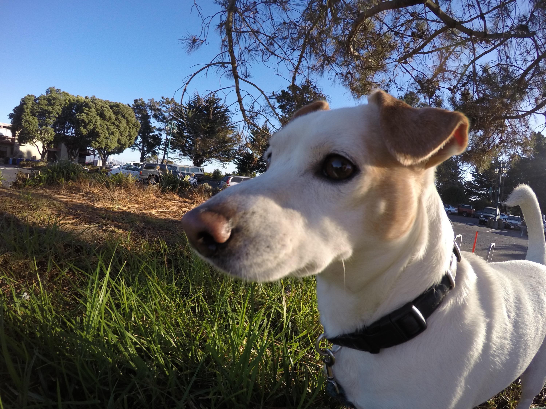 Sam & Amy (Dog: Frankie) Z.