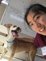 Emily's dog dog boarding & pet sitting