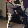 Katie's Happy Critter Sitting dog boarding & pet sitting