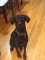 Luke's Mos Eisley Cantina dog boarding & pet sitting