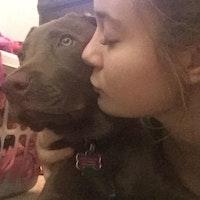 Dog Day Care Hattiesburg Ms