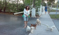 Experienced Day or Stay Dog Care! dog boarding & pet sitting
