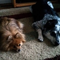 Dog Day Care In Corpus Christi Tx