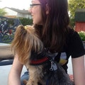 Andie's dog service dog boarding & pet sitting