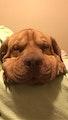Play hard Sleep Well dog boarding & pet sitting