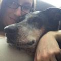 Sherry's Canine INN dog boarding & pet sitting