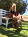 Rachel best dog care in spring vall dog boarding & pet sitting