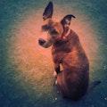 Queen V.B&B dog boarding & pet sitting