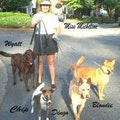 A Real Full Time Mom for your Pet! dog boarding & pet sitting