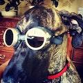 Barkley inn dog boarding & pet sitting