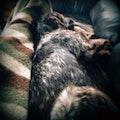 Long Lake Puppy Lounge dog boarding & pet sitting