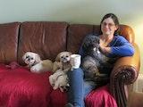Puppy Palace, Small Dog Boarding dog boarding & pet sitting