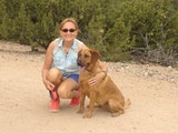 5 STAR BRIT CARE IN SANTA FE! dog boarding & pet sitting