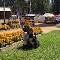 K-9 Mountain Lodge dog boarding & pet sitting