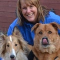 All Critters Great and Small dog boarding & pet sitting