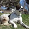 Dog Dynasty K.