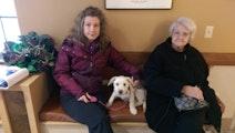 Maryann's Dog Boarding / Daycare dog boarding & pet sitting