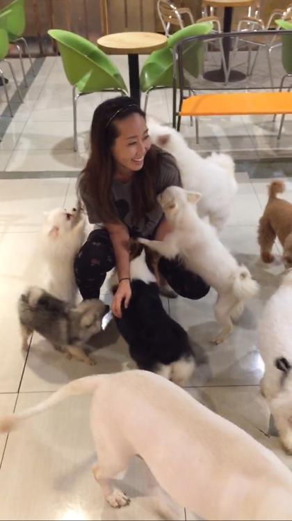 Liz's dog boarding