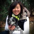 See Spot Run dog boarding & pet sitting