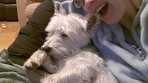 Rachel's tender, love'n care! dog boarding & pet sitting