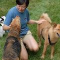 Pawtel in Gaithersburg dog boarding & pet sitting