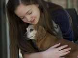Doggie Holiday Inn Express dog boarding & pet sitting