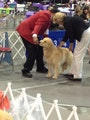 Bruwin Kennel dog boarding & pet sitting