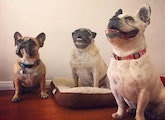 Specializing in small-medium dogs dog boarding & pet sitting