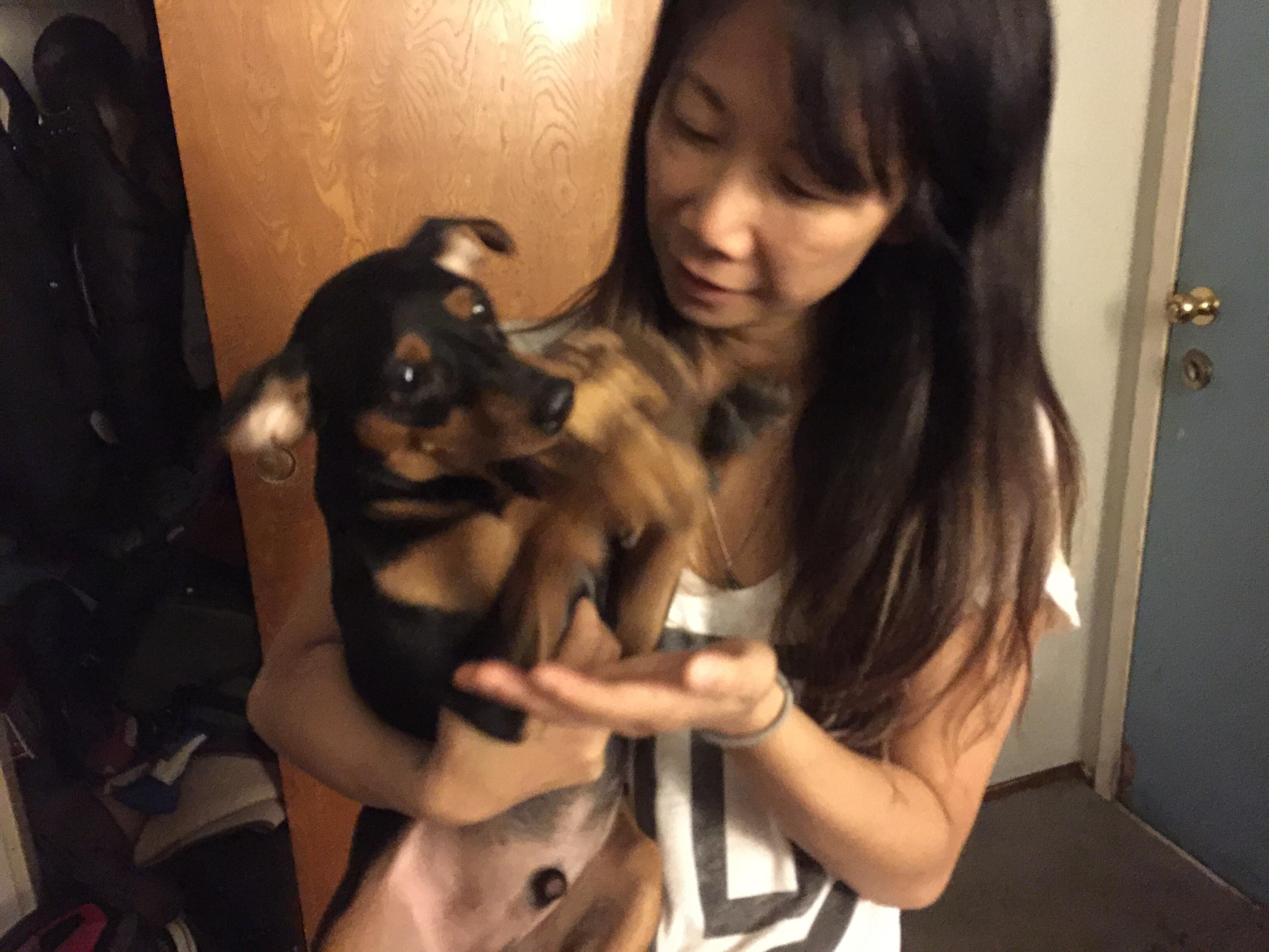 Tamaki's dog day care