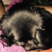 Dog Day Care Easthampton Ma