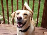 Break-Time Pet Services - Exit 25 dog boarding & pet sitting