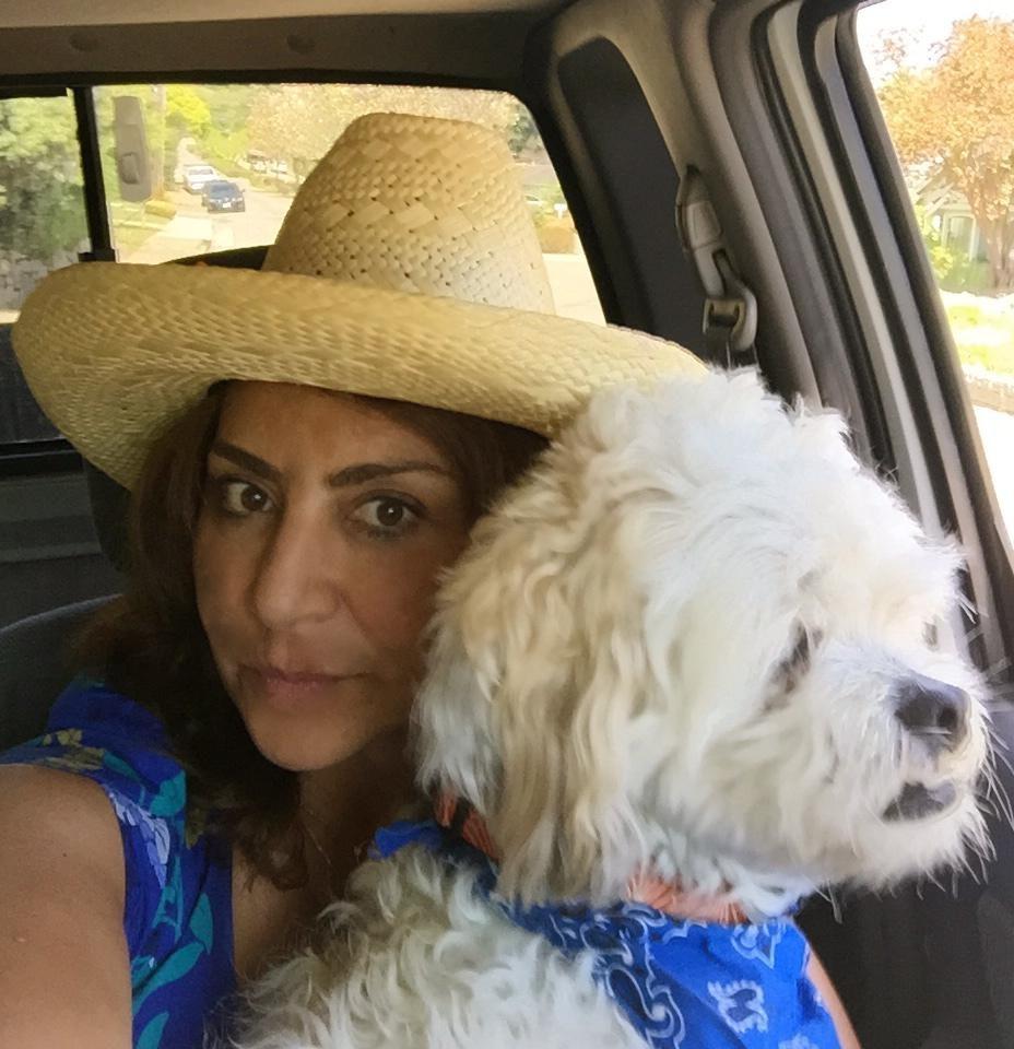 fariba's dog day care