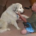 Luv UR Pet Sitters dog boarding & pet sitting