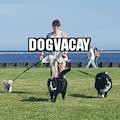 Doggie Paws N' Play dog boarding & pet sitting