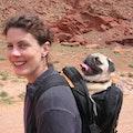Dogtown dog boarding & pet sitting