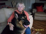 Joan's Creature Comforts dog boarding & pet sitting