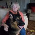 Joan's Creature Comforts dog boarding & pet sitting