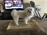 Madhu's Dog boarding dog boarding & pet sitting