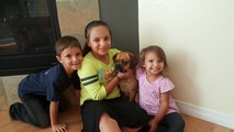 Playtime & Belly Rubs! dog boarding & pet sitting