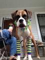 Doggie Day Stay N' Play dog boarding & pet sitting