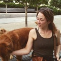 Brewerytown Inn dog boarding & pet sitting